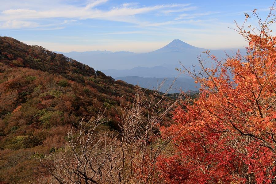 天城山からの富士