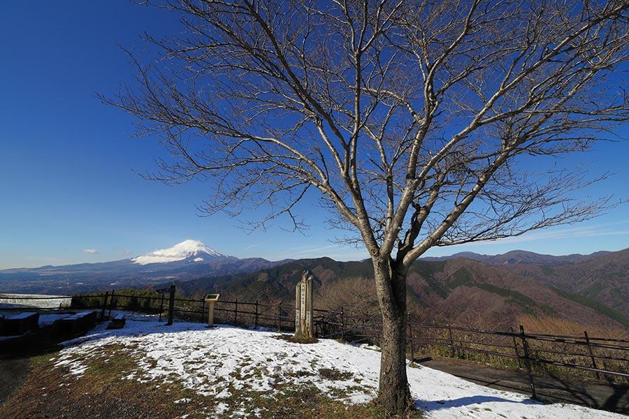 大野山からの富士