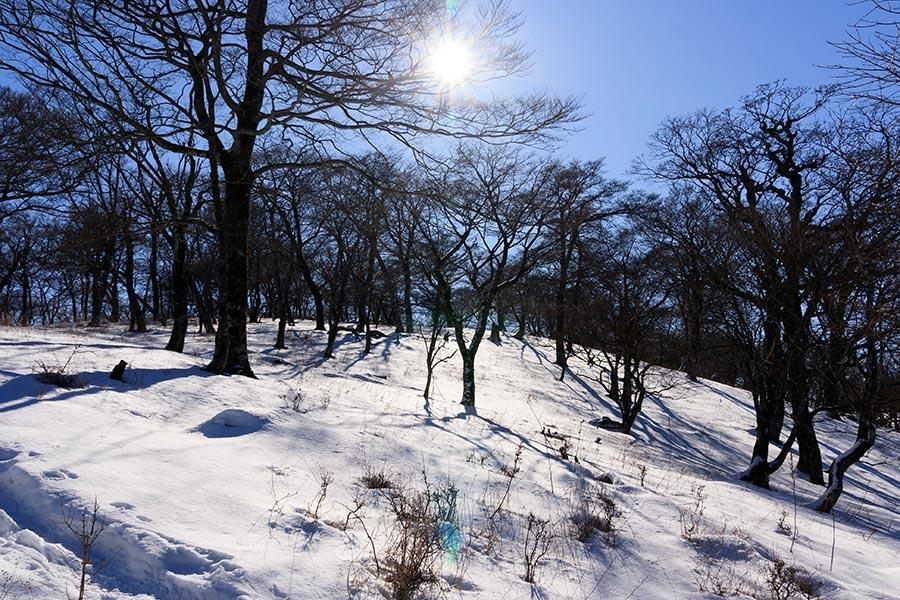 丹沢山手前の雪景色