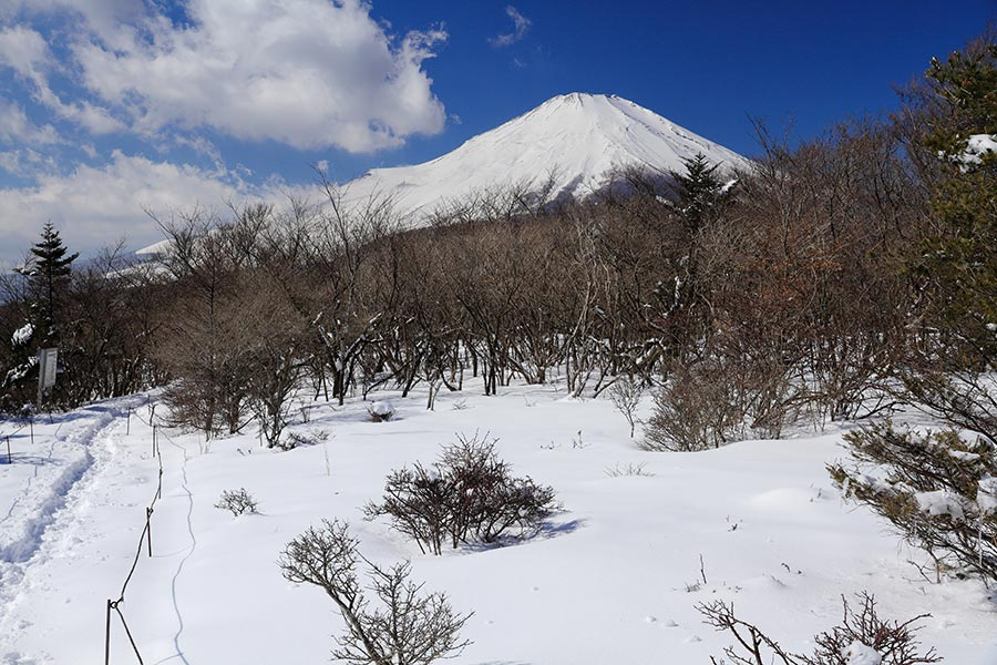 三国山稜からの富士