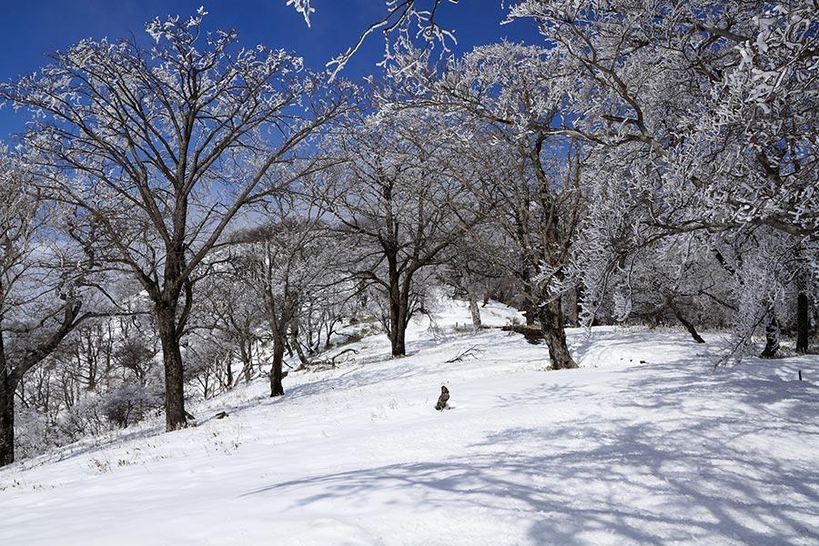 雪と霧氷の登山道