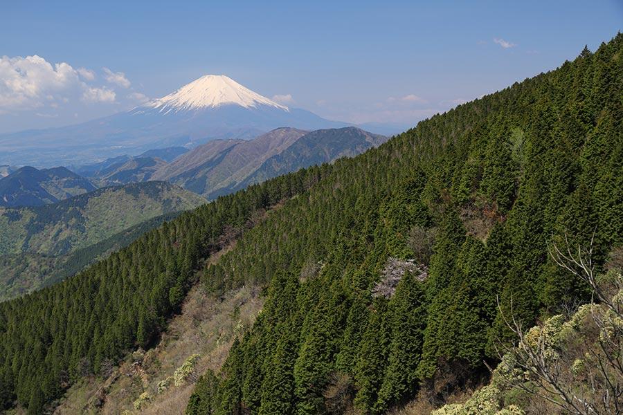 表尾根からの富士