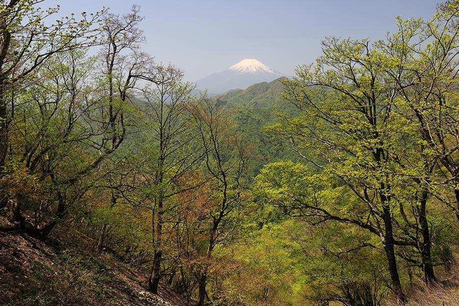 西丹沢の新緑と富士山